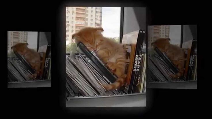 Смешные коты: фотографии спящих котов и кошек