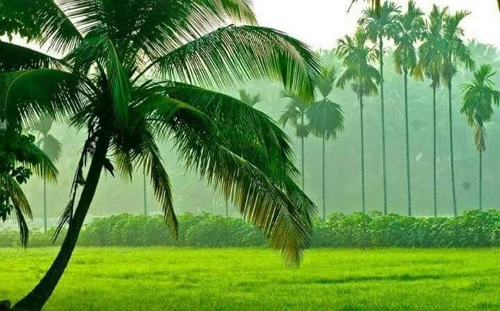 In Kerala nuture