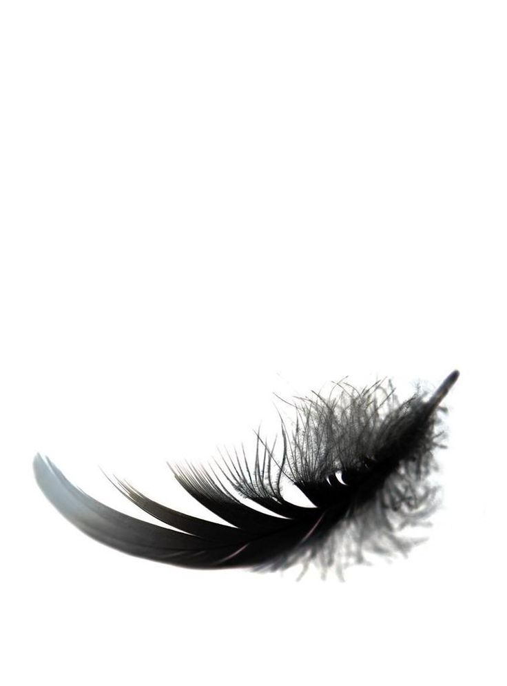 I want Freedom. I am a Feather out of Chage. #FeatherCage