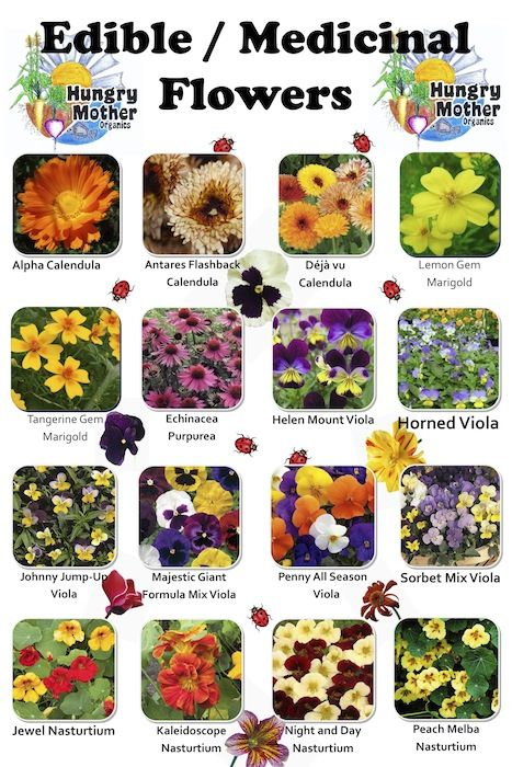 Preparing for Hard Times: Edible Flowers and Herbs