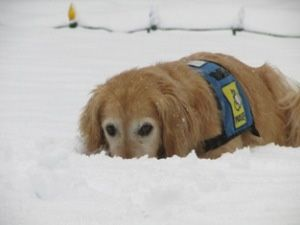 Poppy is trying to hide in the snow!