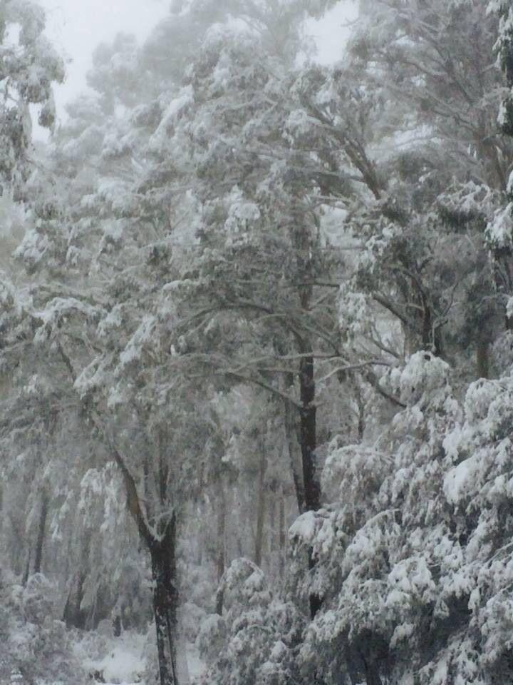 Winter, Mt Buller, Australia