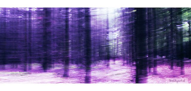 Dark serenity | www.wendyext.nl www.wendyext.nl/fotosflickr  Tags: paars, purple, bos, forest, fantasy, fantasie, abstract, foto, photography, wendy exterkate