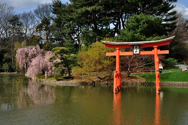 Japanese Garden with lake and orange arch in Prospect Park, Brooklyn. Diane Greene Lent