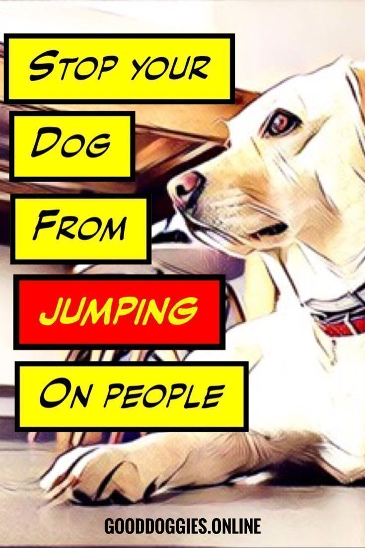 Simple Ways On How To Train Your Dog Not To Jump On People Puppy