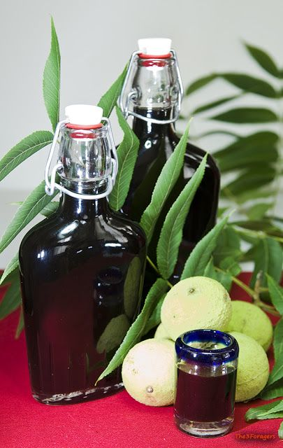 Black walnut liquor:  The 3 Foragers: Foraging for Wild, Natural, Organic Food: Wild Food Recipes