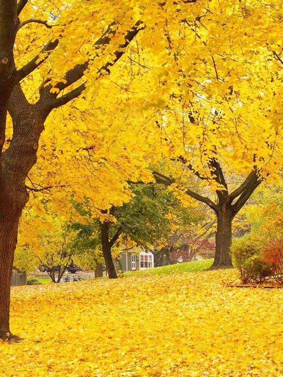 Autumn Trees / 7747