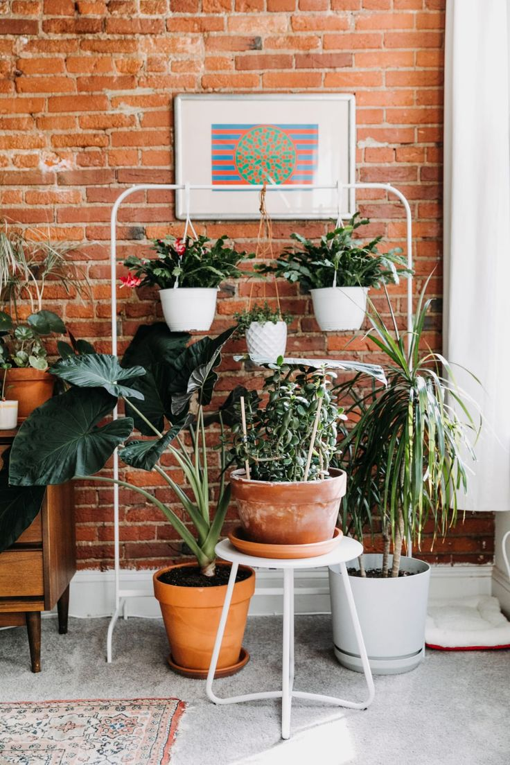 This Philadelphia Rental Has Rustic Brick, Vintage Finds, Tons of Plants, and One Seriously Cute Cat Ikea Plants, Indoor Plants, Hanging Plants, Potted Plants, Cloth Hanger Stand, Ikea Clothes Rack, Philadelphia Apartment, Cozy Cafe, Diy Plant Stand