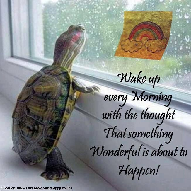 Ood Morning Cute Motivational Quotes: 1000+ Images About Turtle Quotes On Pinterest