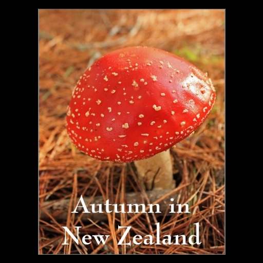 Large red toadstool, Autumn in New Zealand Post Cards