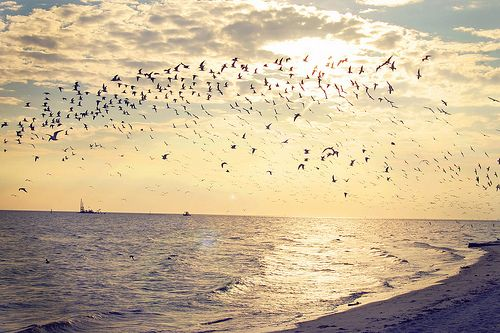 beautiful beach birds ocean
