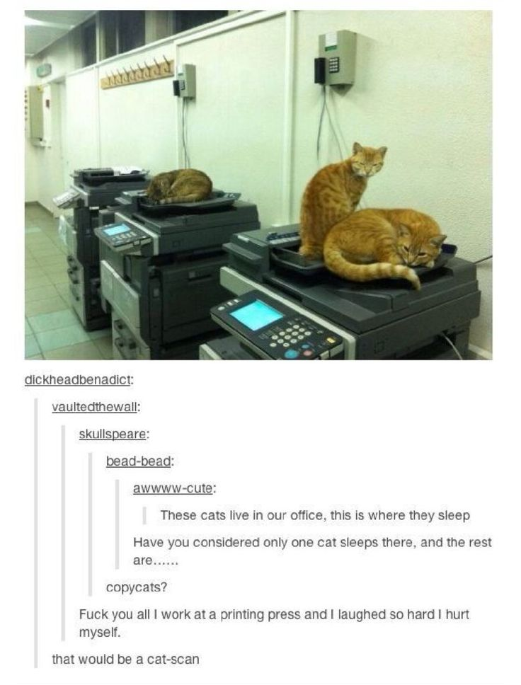 Office cats!