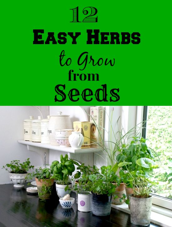 12 Easy Herbs to grow from seeds - start an herb container garden or grow them in a herb garden near the kitchen. Before you know it you will be using fresh herbs all the time!
