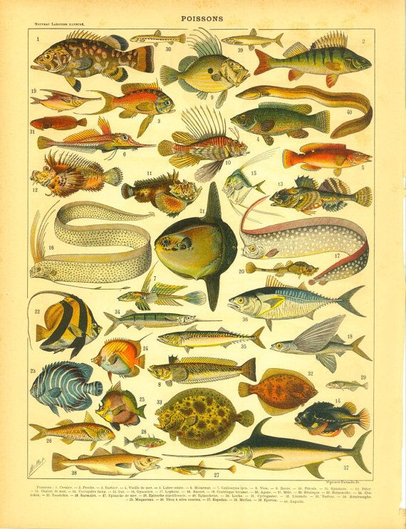 1910s Original Antique Print of Fishes Ocean by CarambasVintage, $16.00
