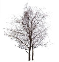 photoshop cutout people trees