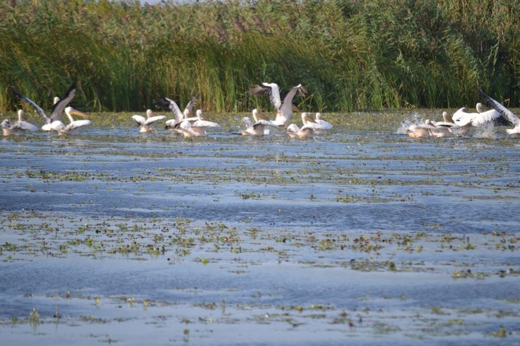 Danube Delta, Romania. Perfect place for birdwatching from mid May 'till October http://www.touringromania.com/tours/long-tours/supreme-adventure-danube-delta-private-tour-6-days.html