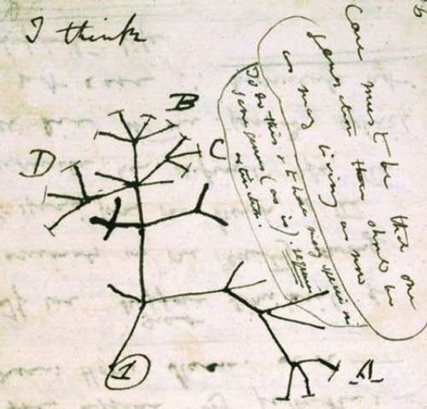 "10 Scientific Images That Changed How We Looked at the World - Popular Mechanics -- Darwin's Phylogenetic Tree of Organisms(Date: 1837) Scrawled in one of his famous notebooks (""red transmutation notebook B""), this is the first branching diagram of the lineage of organisms. The best part is the ""I think"" scribbled up top. ""I think…this may become one of the most important discoveries in human history."""