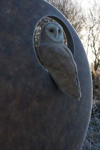 Close up of Barn Owl by Simon Gudgeon 77 x 78 x 23 cm (height x width x depth)