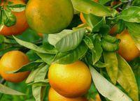 Oranges-bio.net