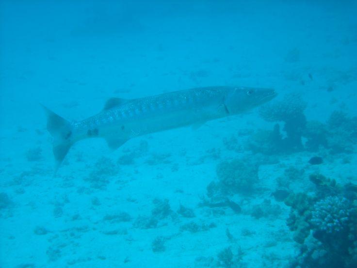 Petite visite des profondeurs dans la baie de Marseille !! #plongee #diving #Marseille #underwater