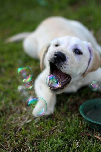 Dog playing with the bubbles