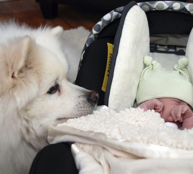 Hundpsykologen Karen Sejer Kristensen ger tips på hur du  kan göra för att hunden och bebisen ska trivas ihop.