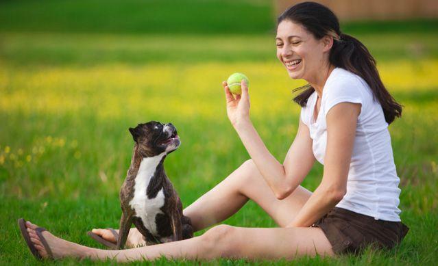 Comandos Si bien nos damos cuenta de que tenemos un perro entrenado que está listo para saltar a través de aros de 15 en 30 segundos no es lo mismo que tener un perro que sabe cómo sentarse, eso no quiere decir que no se puede enseñar la obediencia básica …