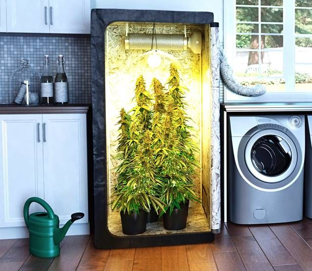 Where to Grow Weed Indoors a Guide for More Buds