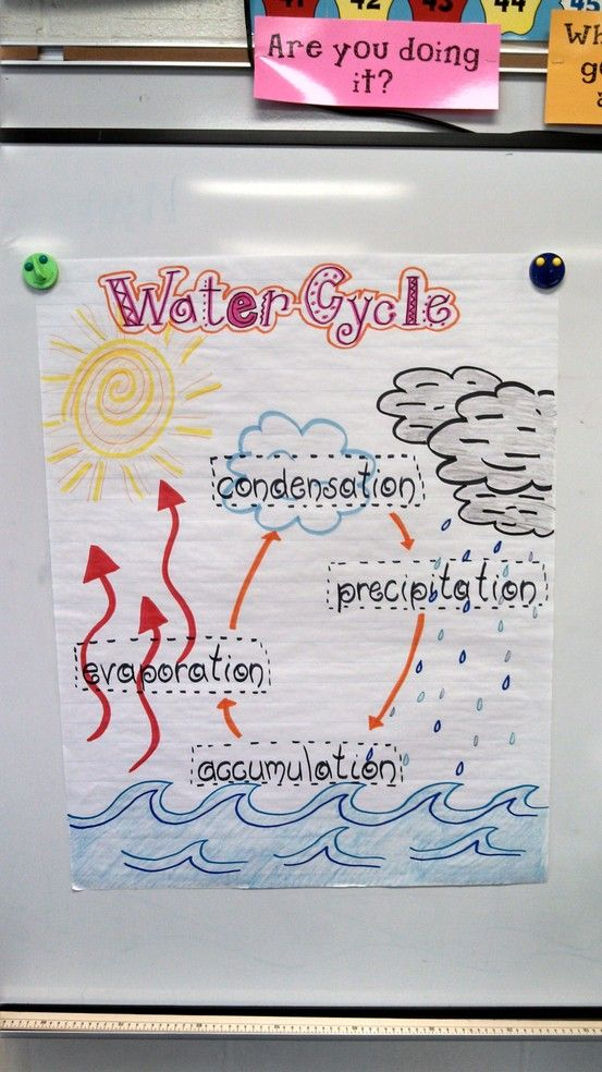 I made this visual of the Water Cycle for my second grade class. jb