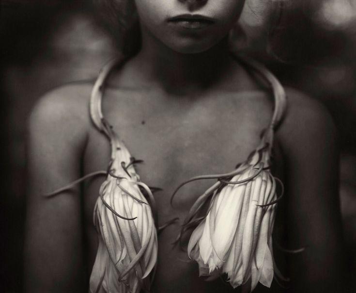 Sally Mann, Night-blooming Cereus, 1988