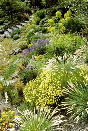 Create a Water-Wise Herb Garden—Drought-tolerant herbs, such as sage, Spanish lavender, santolina and ground-hugging thymes, conserve water and prevent erosion.