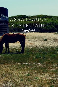 Assateague State Park is a perfect spot in Maryland to introduce yourself to beach camping. Assateague Island camping is fun and a great spot for beginners. Click through for first time camping tips and repin to your outdoor boards.