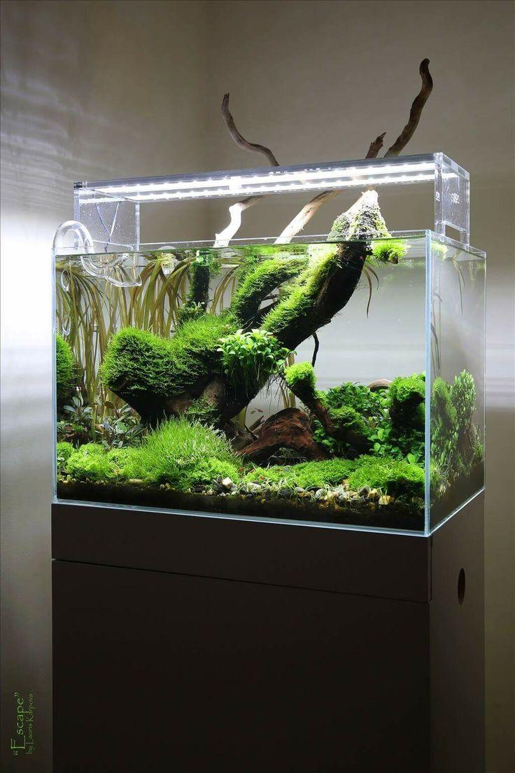 Freshwater aquarium fish cape town - Planted Aquarium Nano Tank Aquascape By Lauris Karpovs