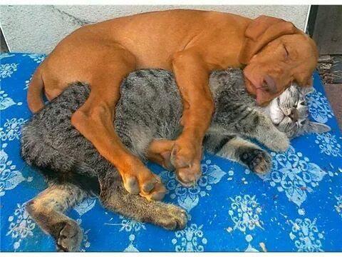 Awww, best friends. :)