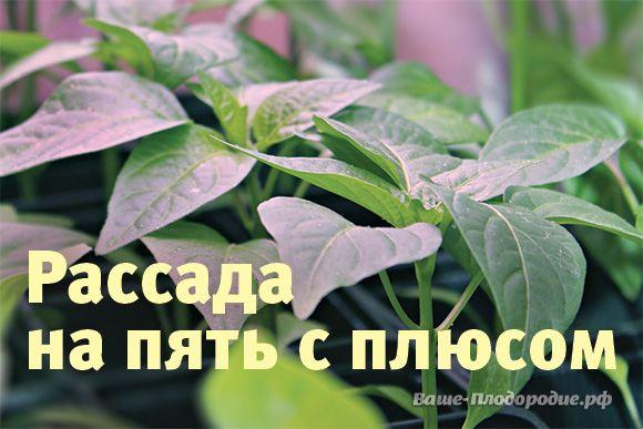 Выращивание рассады — Ваше Плодородие