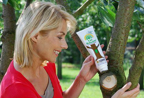 Durch den Baumschnitt werden das Wachstum und der Neuaustrieb der Gehölze gefördert und Krankheiten und Pilzinfektionen vorgebeugt. Wichtig sind der richtige Schnittzeitpunkt und die richtige Schnitttechnik. Durch den Gehölzschnitt wird der Pflanze eine Wunde zugefügt. Diese sollte versorgt werden, um das Eindringen unerwünschter Keime zu verhindern. Informieren Sie sich hier über die wichtigsten Schnittregeln.