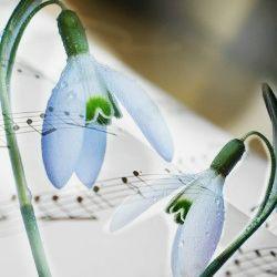 Melodia lina a gingasilor ghiocei murmura duios... 1 Martie senin si o dulce primavara! http://ofelicitare.ro/felicitari-de-1-martie/1-martie-senin-486.html