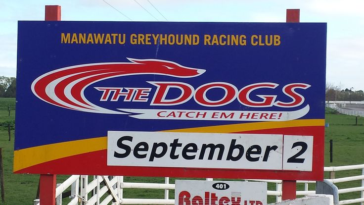 Who let the dogs out? At Manawatu's harness track. #pnpersonnel #manawatu #greyhounds
