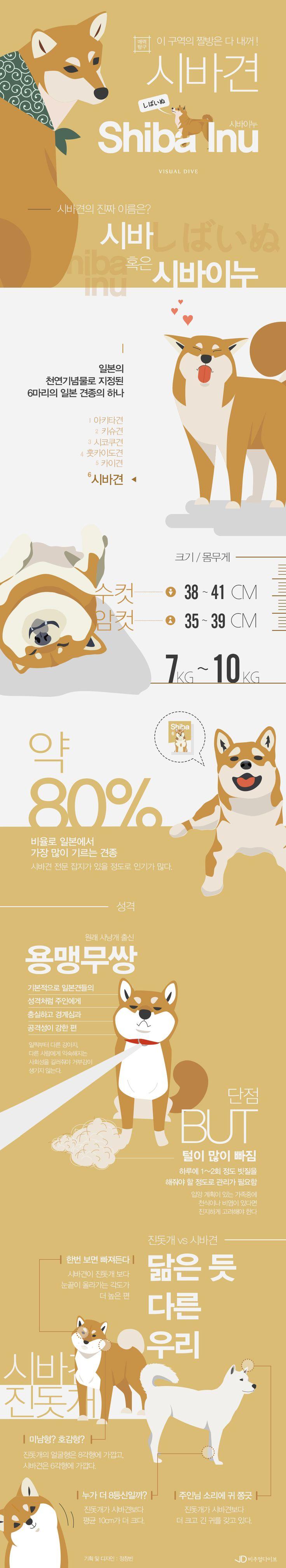 '짤방계의 유재석' 시바견의 매력탐구 [인포그래픽] # shiba / #Infographic ⓒ 비주얼다이브 무단 복사·전재·재배포 금지