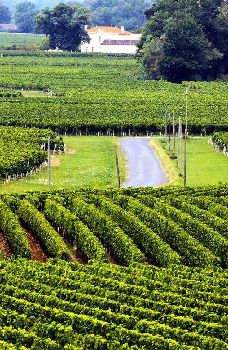 Vines 101: Bordeaux Wine. Pulling back the curtain on some of our favourite wine regions in the world and exploring their oenological offerings.  http://www.butterfield.com/blog/2013/09/11/vines-101-bordeaux-wine/  #travel #wine #Bordeaux #drinks #guide #holiday #vacation #trip #myBNR