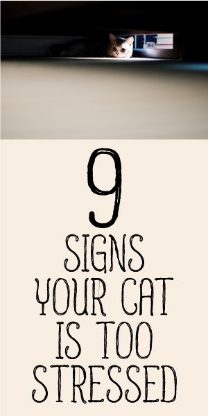 9 Signs Your Cat Is Too Stressed