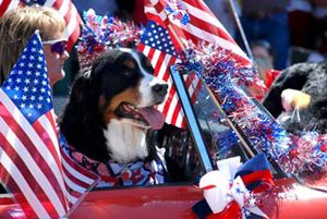 These patriotic pups are prancing to the classic tunes of America | Woof Blitzer