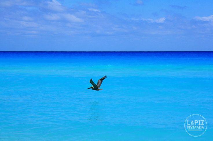 Qué hacer en Cancún sin dinero: 10 actividades y lugares turísticos para visitar