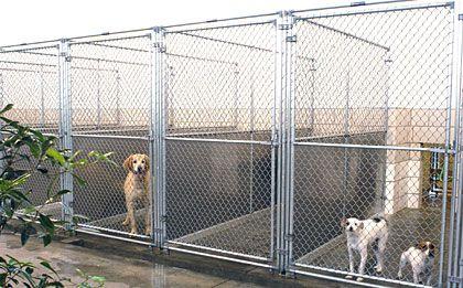 Mason Company Canine Outdoor And Indoor Kennel Runs Diy