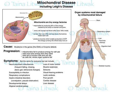 Adult Mito Disease