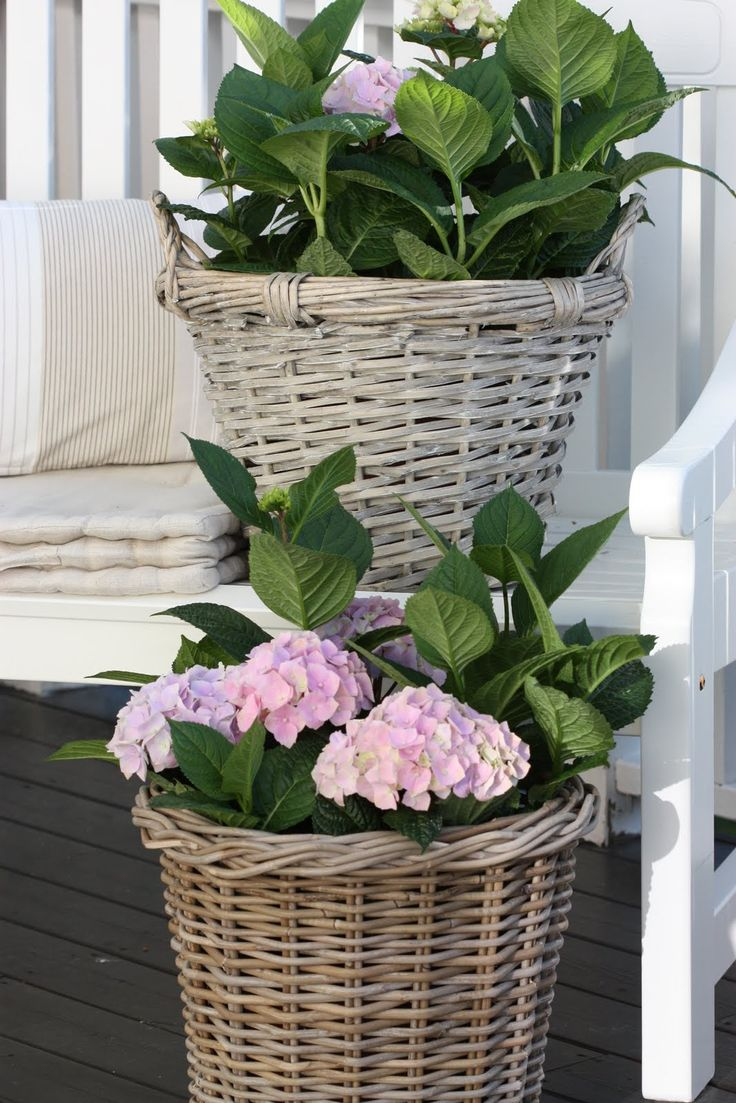 Baskets with Hydrangea