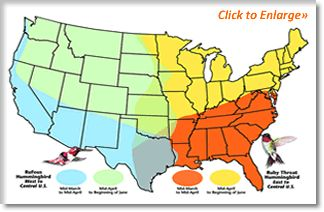 Hummingbird Migration Facts from www.birdfeeders.com