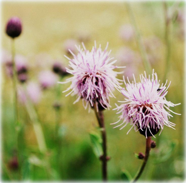 natura lila
