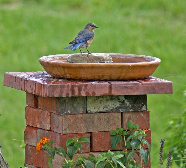 Create a bird bath or feeder with bricks you might have laying around from other home projects or pick them up at a home improvement store for cheap... Just stack them up and lay a piece of tile or a stepping stone on top and then lay a saucer on top. There you have a nice bird feeder to enjoy bird watching. Fill up with either water or bird seed..