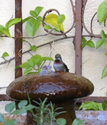 Sharon Lovejoy The Hummingbirds Love Small Bubbler
